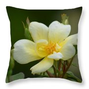 Yellow Rose 2013a Throw Pillow