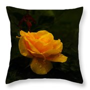 Yellow Rose Dapples With Waterdfrops Throw Pillow
