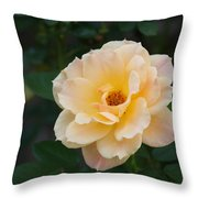 Yellow Rose Of Texas  Throw Pillow