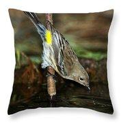 Yellow-rumped Warbler Drinking Throw Pillow
