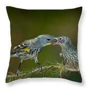 Yellow-rumped Warbler Feeding Young Throw Pillow