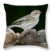 Yellow-rumped Warbler Hen Throw Pillow