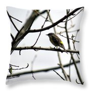 Yellow Rumped Warbler Throw Pillow