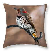 Yellow-shafted Northern Flicker Throw Pillow