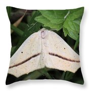 Yellow Slant-line Moth Throw Pillow