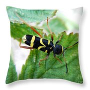 Yellow Stripped Beetle Throw Pillow