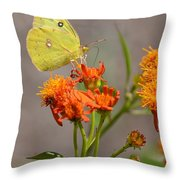 Yellow Sulphur Butterfly Throw Pillow