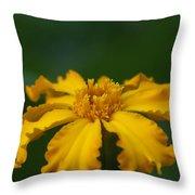 Yellow Sun Burst...   # Throw Pillow