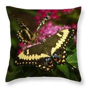 Yellow Swallowtail Butterflies  Throw Pillow