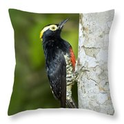 Yellow-tufted Woodpecker Throw Pillow