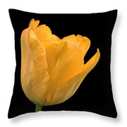Yellow Tulip Open On Black Throw Pillow