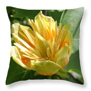 Yellow Tuliptree Flower Throw Pillow