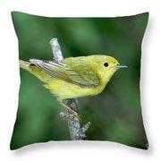 Yellow Warbler Dendroica Petechia Female Throw Pillow