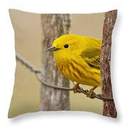 Yellow Warbler Pictures 90 Throw Pillow
