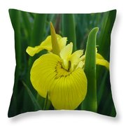 Yellow Water Iris Throw Pillow