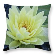 Yellow Water Lily Nymphaea Throw Pillow