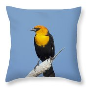 Yellowheaded Blackbird Throw Pillow