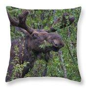 Yellowstone Munching Moose Throw Pillow
