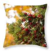 Taxus Baccata Or Yew Red Fruits On Twig  Throw Pillow