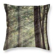 Yosemite Pines In Sunlight Throw Pillow