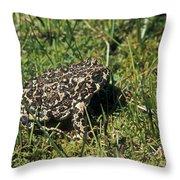 Yosemite Toad Bufo Canorus Throw Pillow