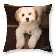 Yoshi Is One Today - Havanese Puppy Throw Pillow