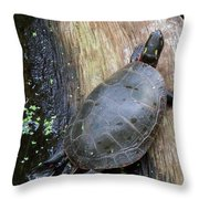 You Can't Rush A Turtle Throw Pillow