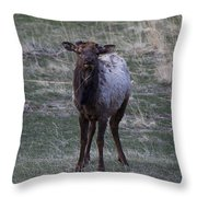 You Lookin' At Me Throw Pillow