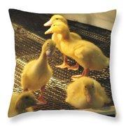 You Talkin To Me? Farm Show Harrisburg Pa  Throw Pillow