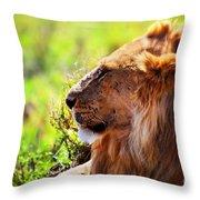Young Adult Male Lion On Savanna. Safari In Serengeti Throw Pillow