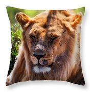 Young Adult Male Lion Portrait. Safari In Serengeti Throw Pillow