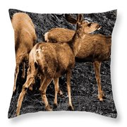 Young And Hungry Sc Throw Pillow