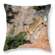 Young Auodad Sheep Descending The Canyon Throw Pillow