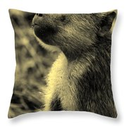 Young Baboon In Black And White Throw Pillow