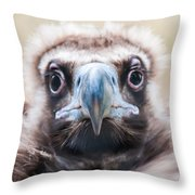 Young Baby Vulture Raptor Bird Throw Pillow