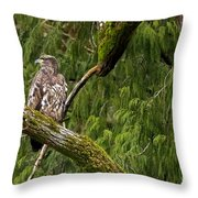 Young Baldy 2 Throw Pillow