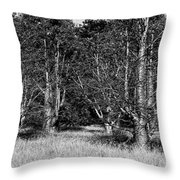 Young Baobab Trees  Throw Pillow