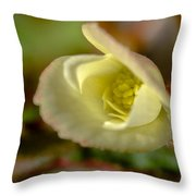 Young Begonia Bloom Throw Pillow