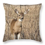 Young Black-tailed Deer Throw Pillow