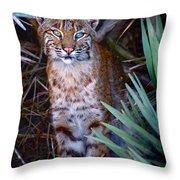 Young Bobcat Throw Pillow
