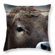Young Braunvieh Bull Throw Pillow