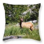 Young Bull Elk - Yellowstone National Park - Wyoming Throw Pillow