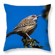 Young Cactus Wren Throw Pillow by Robert Bales