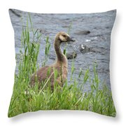 Young Canadian Goose Throw Pillow