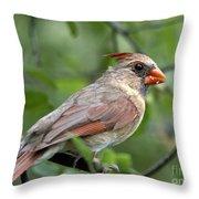 Young Cardinal Throw Pillow