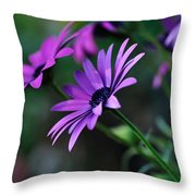 Young Daisies Throw Pillow