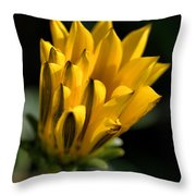 Young Daisy Throw Pillow