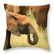 Young Elephant Throw Pillow