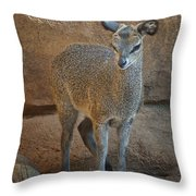 Young Female Klipspringer Throw Pillow