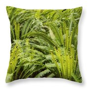 Young Fiddleheads Throw Pillow